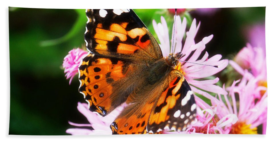 Flower Bath Towel featuring the photograph Late Summer Painted Lady by Marilyn Hunt