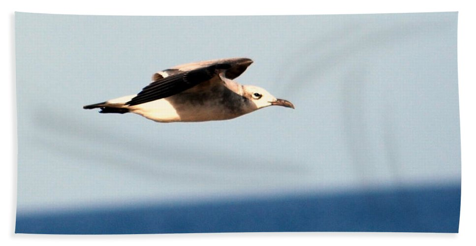 Laughing Gull Hand Towel featuring the photograph Laughing Gull 001 by Larry Ward
