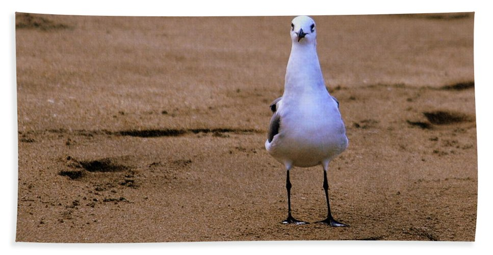 Florida Hand Towel featuring the photograph Laughing Gull 004 by Larry Ward