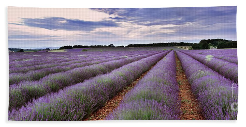 Lavender Bath Sheet featuring the photograph Lavender Fields by Rod McLean
