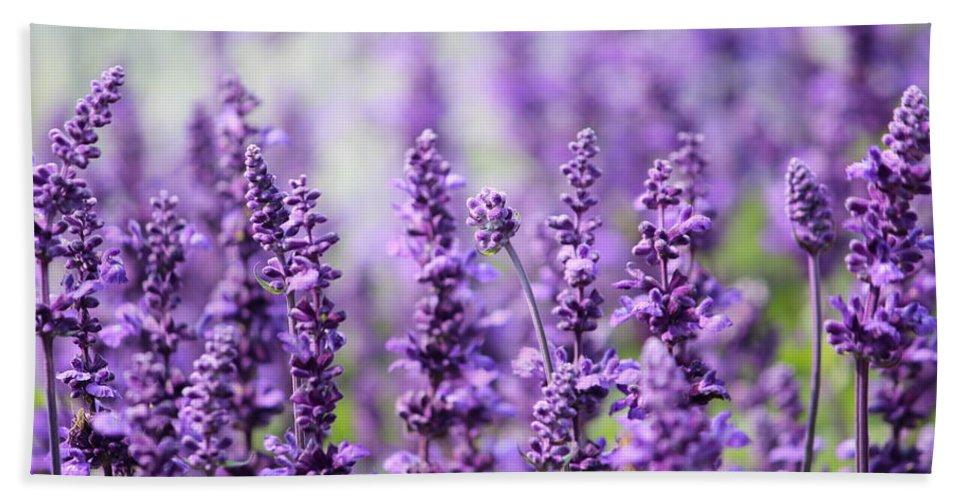 Season Bath Sheet featuring the photograph Lavender by Heike Hultsch