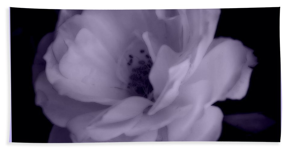 Rose Hand Towel featuring the photograph Lavender Perfection by Kathy Sampson
