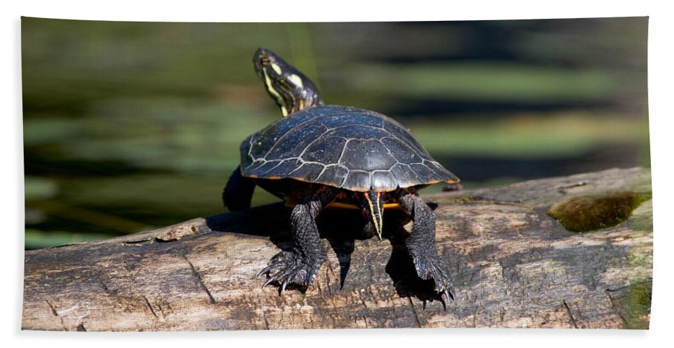 Painted Turtle Hand Towel featuring the photograph Lazy Day On A Log 6241 by Brent L Ander