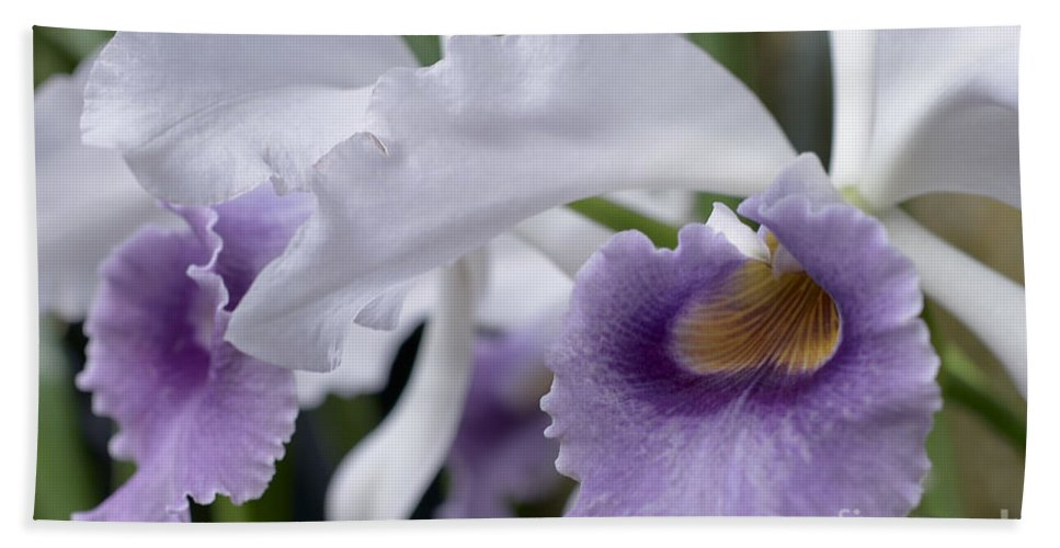 Orchid Bath Sheet featuring the photograph Lc Beechview by Terri Winkler