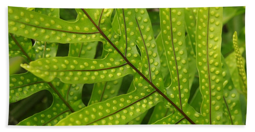 Leaf Hand Towel featuring the photograph Leaf by Belinda Greb