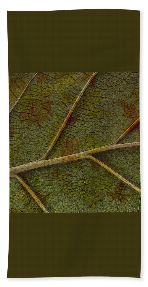 Botanical Abstract Hand Towel featuring the photograph Leaf Design II by Ben and Raisa Gertsberg