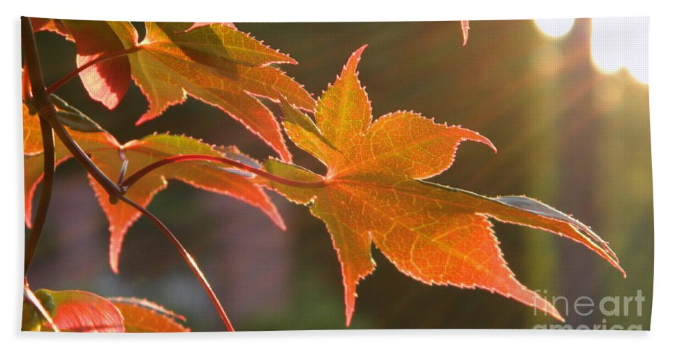 Sun Hand Towel featuring the photograph Leaf In The Sun by Andrea Anderegg