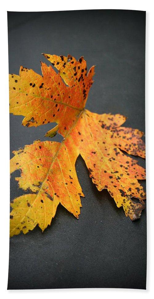 Nature Bath Sheet featuring the photograph Leaf Portrait by Linda Sannuti