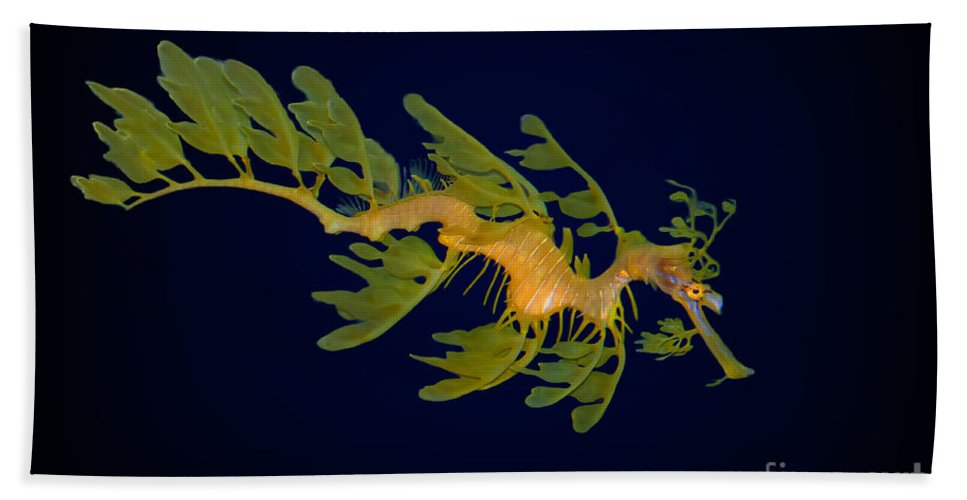 Sea Hand Towel featuring the photograph Leafy Seadragon by Photos By Cassandra