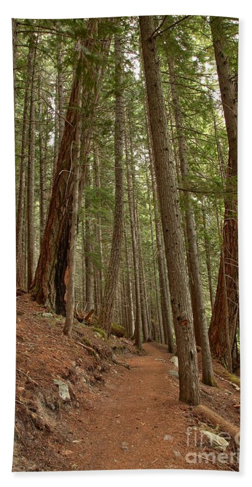 Cheakamus Rainforest Bath Sheet featuring the photograph Leaning Over The Trail by Adam Jewell
