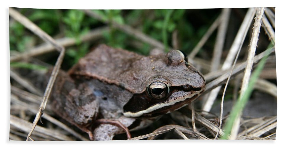 Toad Bath Sheet featuring the photograph Wood Frog by Neal Eslinger