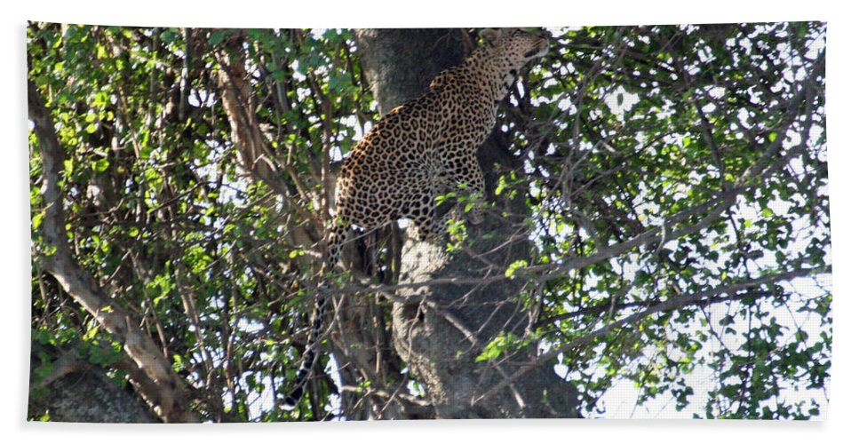 Leopard Hand Towel featuring the photograph Leaping Leopard by David Beebe
