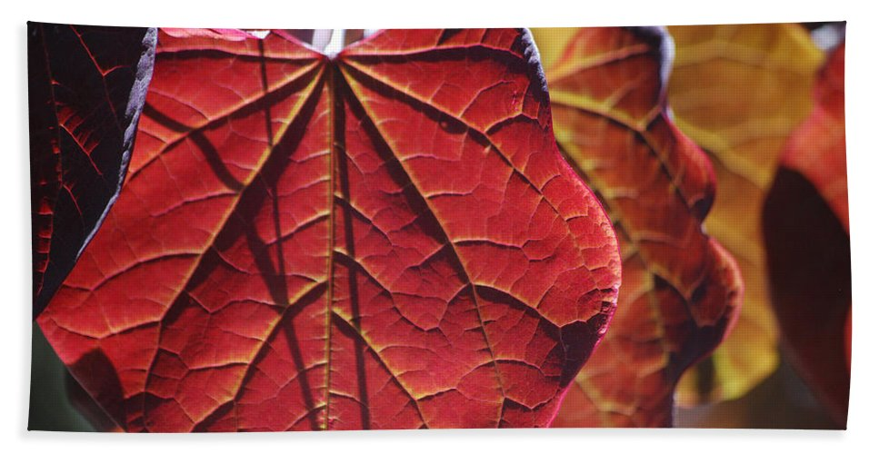 Becky Furgason Hand Towel featuring the photograph #leave by Becky Furgason