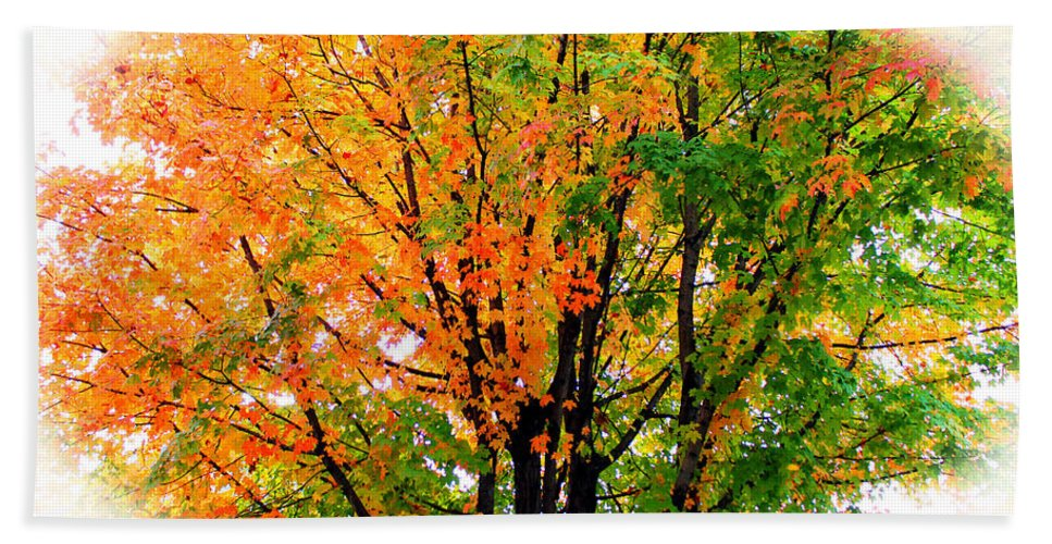 Tree Bath Sheet featuring the photograph Leaves Changing Colors by Cynthia Guinn