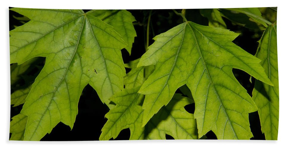Leaves Hand Towel featuring the photograph Leaves by John Herzog