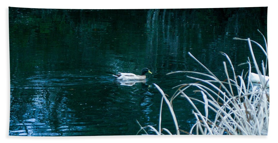 Duck Hand Towel featuring the photograph Left Behind by Mechala Matthews