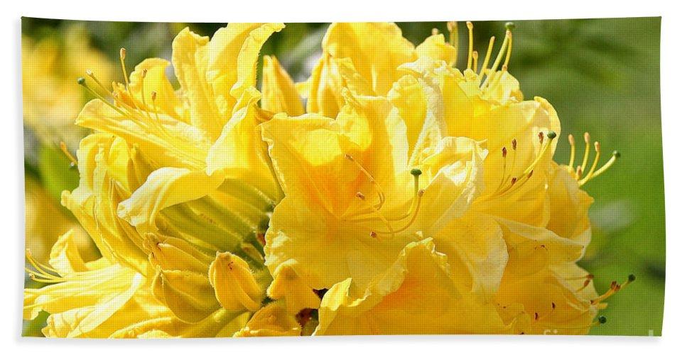 Flower Bath Sheet featuring the photograph Lemon Drop Azalea by Susan Herber