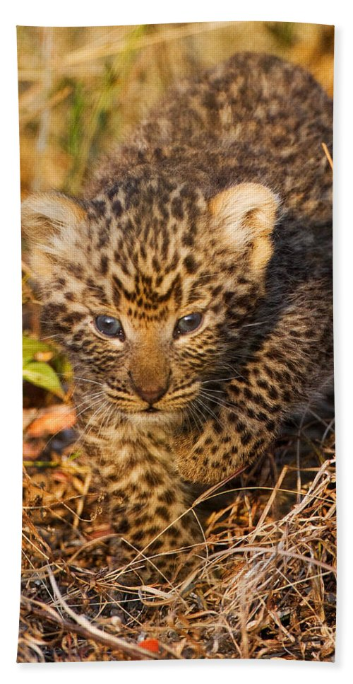 Leopard Hand Towel featuring the photograph Leopard Cub by Max Waugh