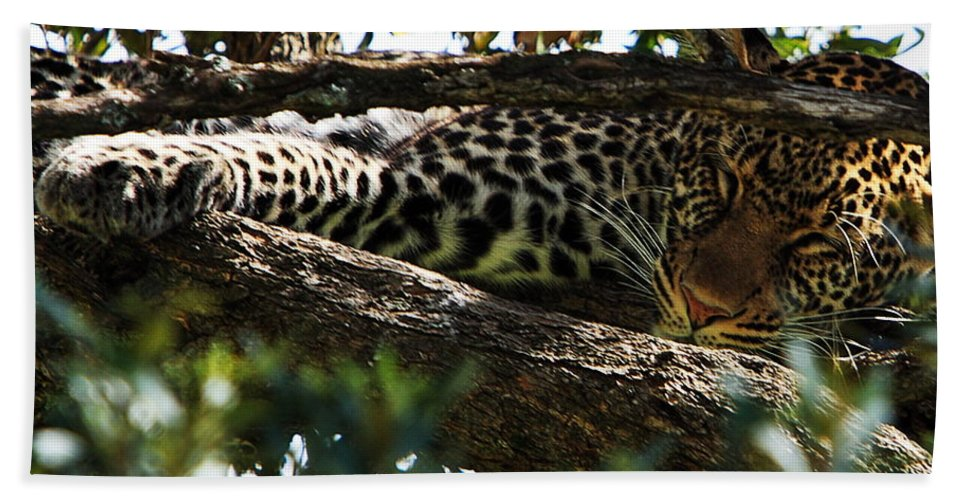 Leopard Hand Towel featuring the photograph Leopard In A Tree by Aidan Moran