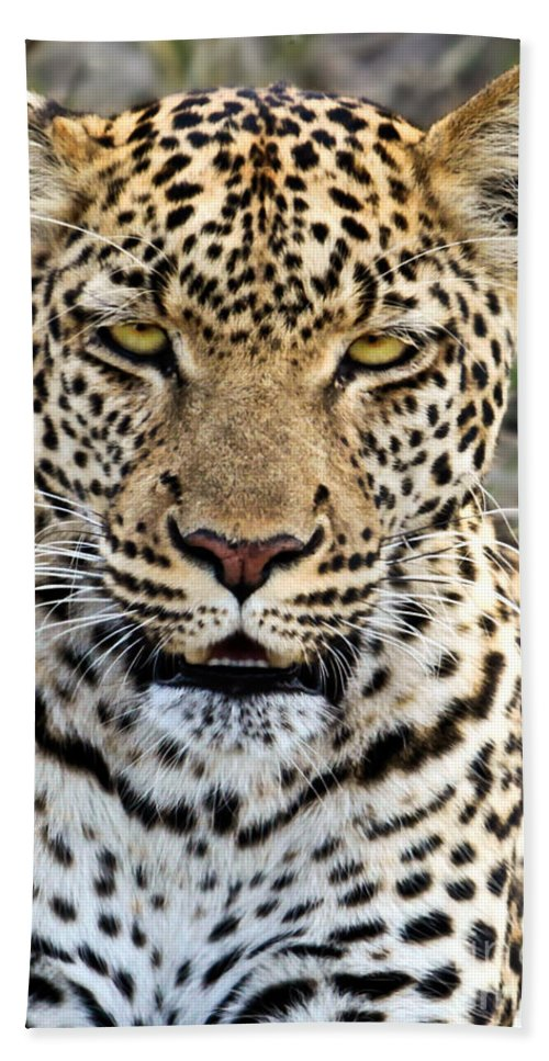 Panthera Pardus Hand Towel featuring the photograph Wild Leopard In Botswana by Liz Leyden