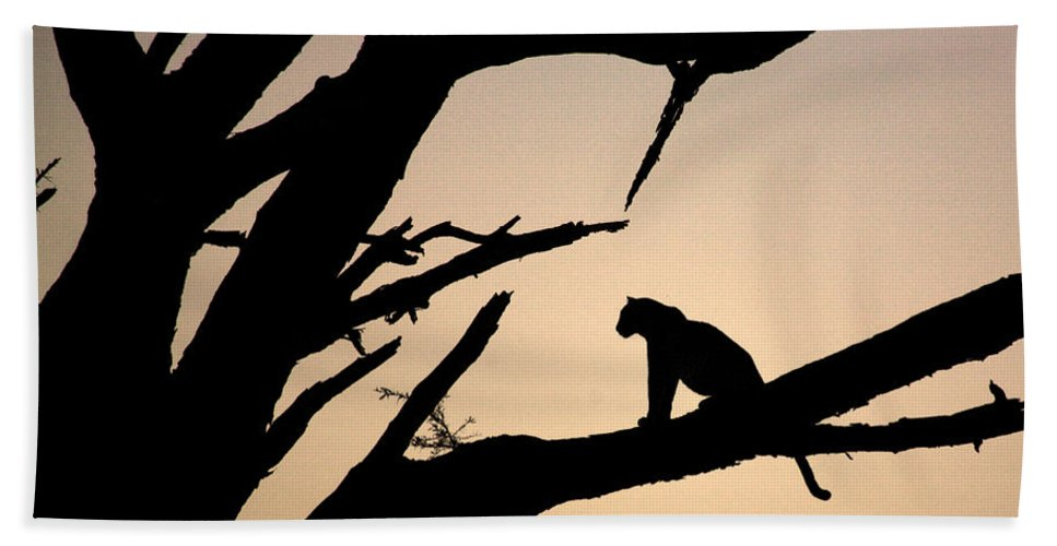 Africa Bath Sheet featuring the photograph Leopard Sitting In A Tree by Deborah Benbrook