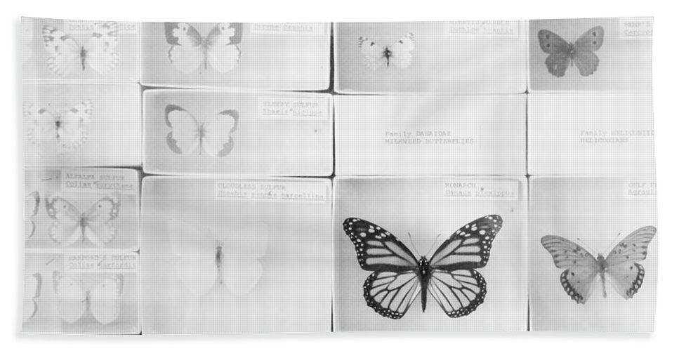 Lepidopterology Hand Towel featuring the photograph Lepidopterology by Bethany Helzer