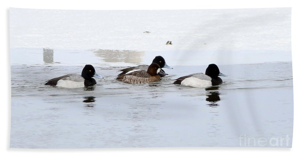 Lesser Scaup Hand Towel featuring the photograph Lesser Scaup by Lori Tordsen