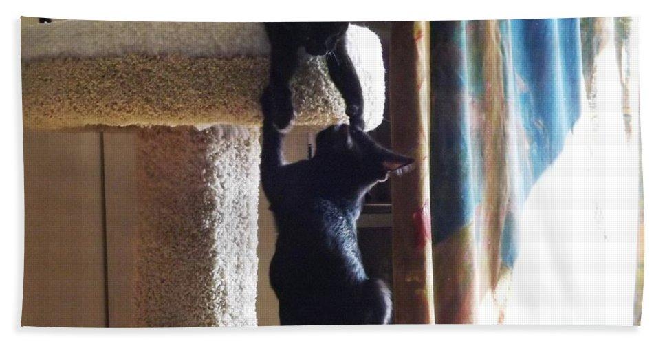 Kitten Bath Sheet featuring the photograph Let Me Help You Up by Jussta Jussta
