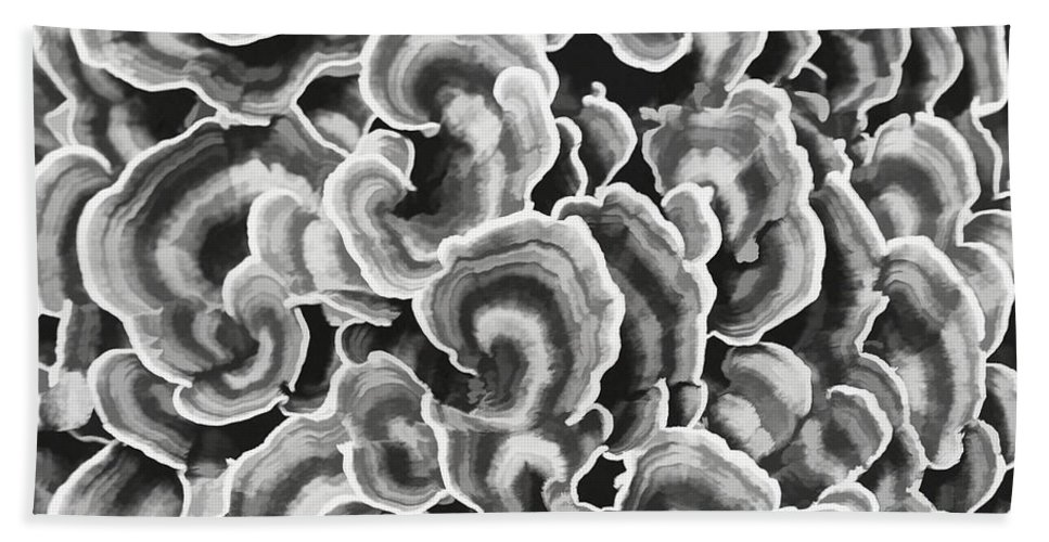 Lichen Hand Towel featuring the photograph Lichen Abstract by Barbara McMahon