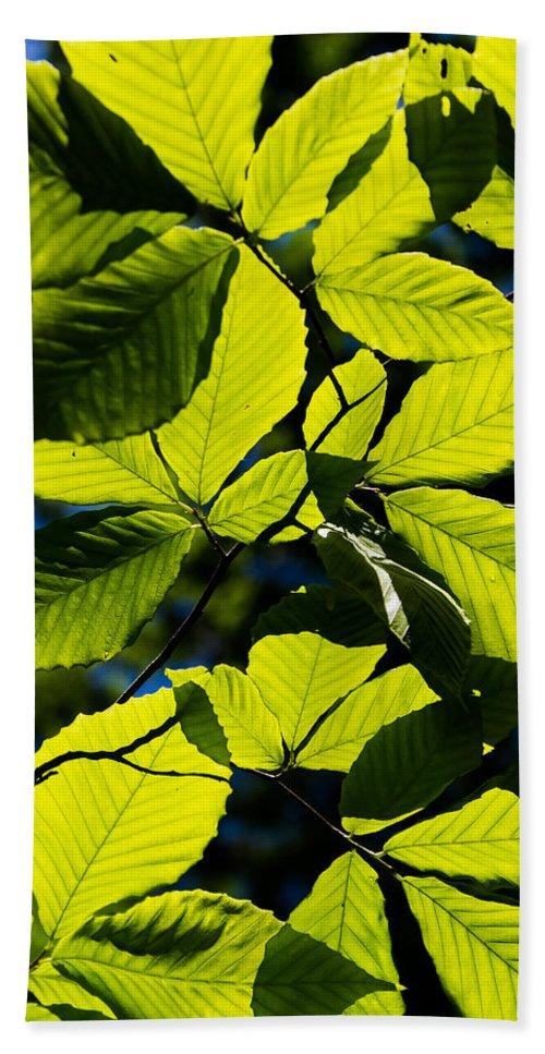 Leaf Bath Sheet featuring the photograph Light And Shadow by Gaurav Singh