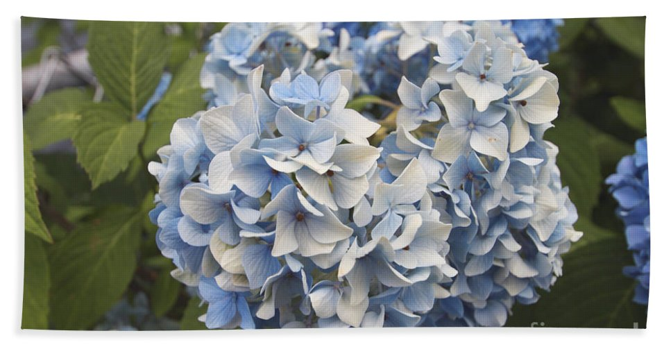 Flower Hand Towel featuring the photograph Light Blue by William Norton