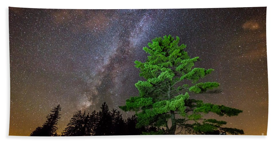 Tree Bath Sheet featuring the photograph Light Up Your Life by Michael Ver Sprill