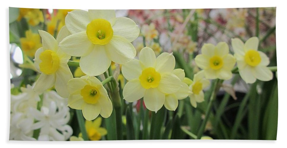 Daffodils Hand Towel featuring the photograph Light Yellow Daffodils by MTBobbins Photography