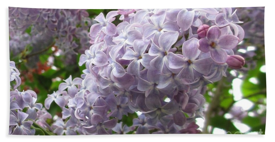Lilac Hand Towel featuring the photograph A Lighter Shade Of Lilac by Martin Howard