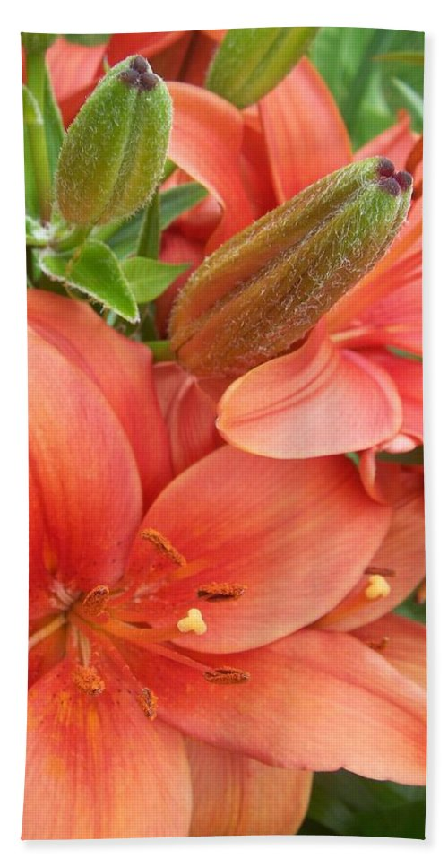 Flower Bath Sheet featuring the photograph Lillys And Buds 3 by Anita Burgermeister