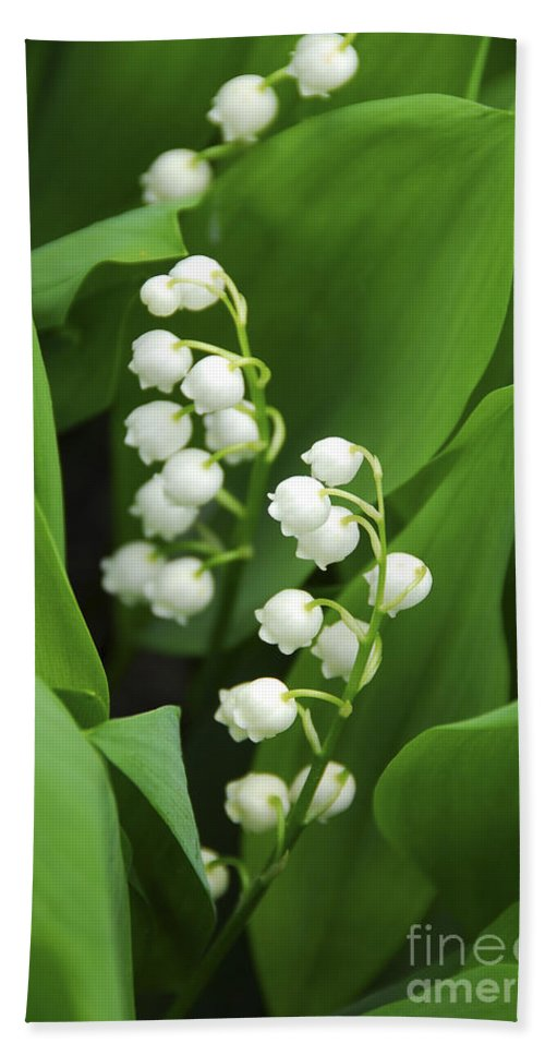 Lily Hand Towel featuring the photograph Lily-of-the-valley by Elena Elisseeva