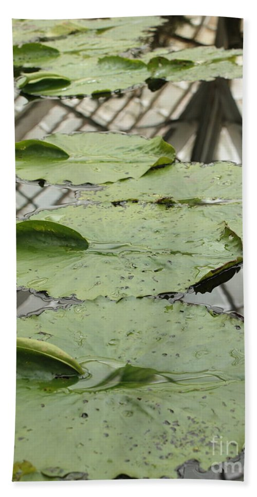 Lily Pads Bath Towel featuring the photograph Lily Pads With Reflection Of Conservatory Roof by Carol Groenen