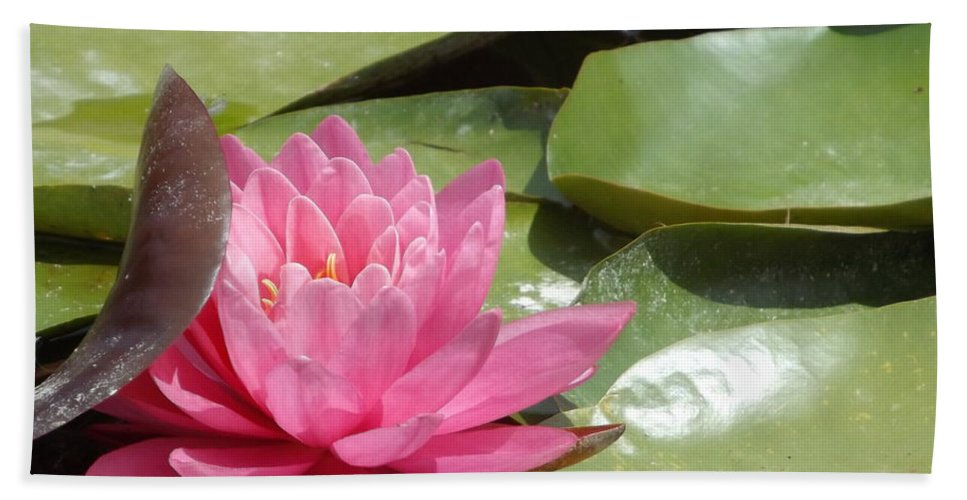 Pink Bath Sheet featuring the photograph Lily Sleeps In by Caryl J Bohn