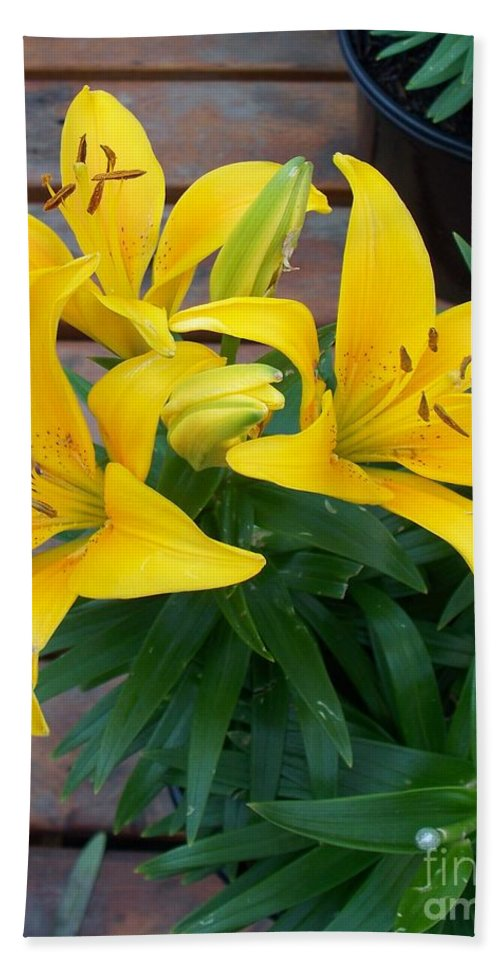 Photograph Hand Towel featuring the photograph Lily Yellow Flower by Eric Schiabor