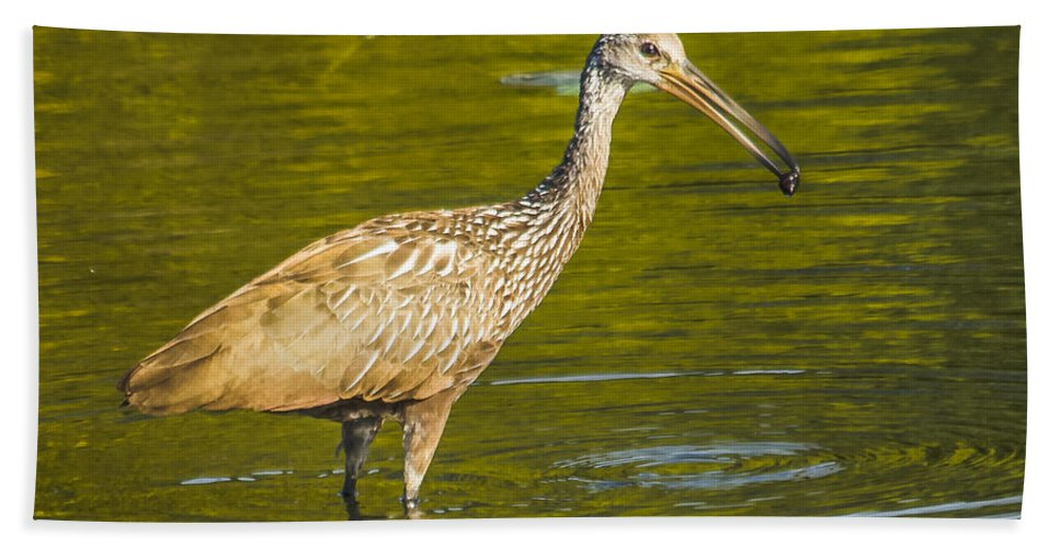 Bird Hand Towel featuring the photograph Limpkin With A Snack by Jane Luxton