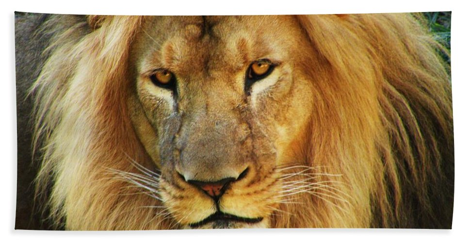 Lion Hand Towel featuring the photograph Lion by Christina Stanley