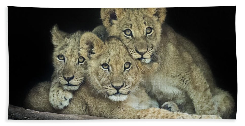 Cute Hand Towel featuring the photograph Three Lion Cubs by Linda D Lester