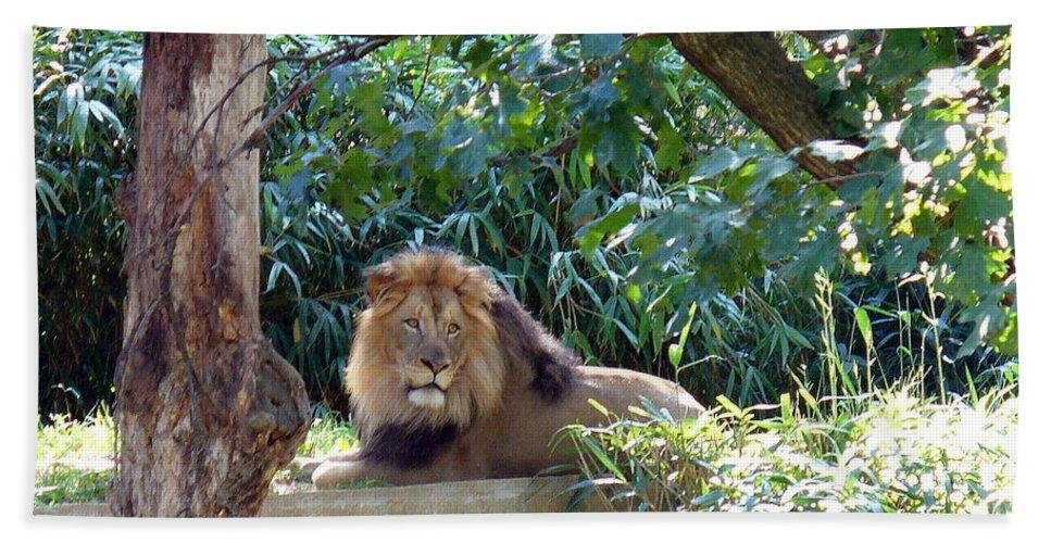 Nature Hand Towel featuring the photograph Lion King At Washington Zoo by Lingfai Leung
