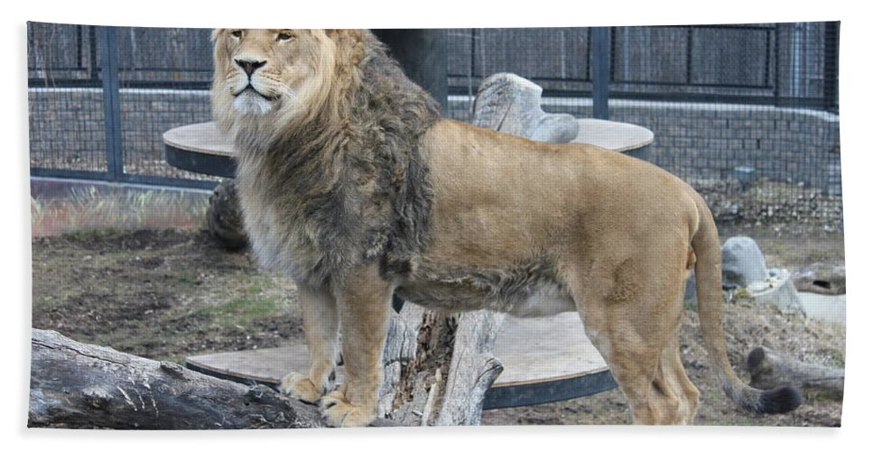 Lion Hand Towel featuring the photograph Lion King by Ruth Kamenev