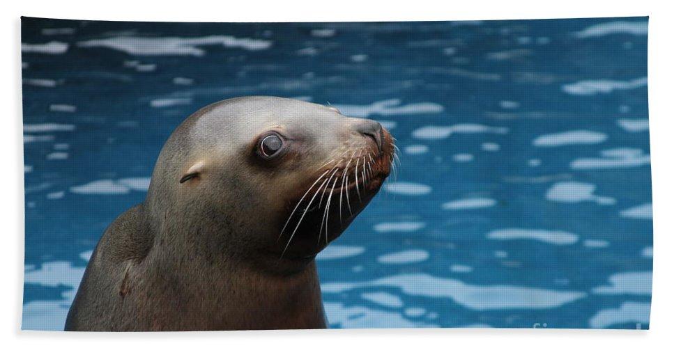 Sea Lion Bath Towel featuring the photograph Lion Pup by Rick Monyahan