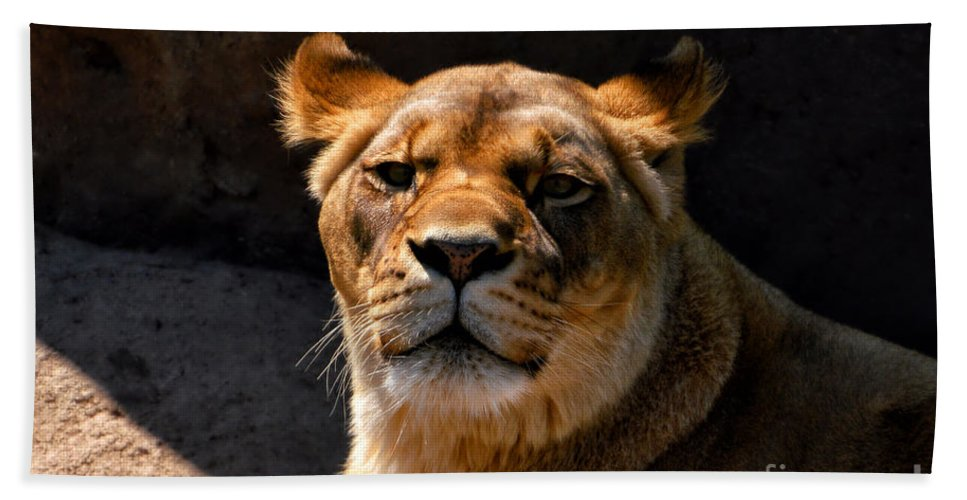 Animals Bath Sheet featuring the photograph Lioness Hey Are You Looking At Me by Thomas Woolworth
