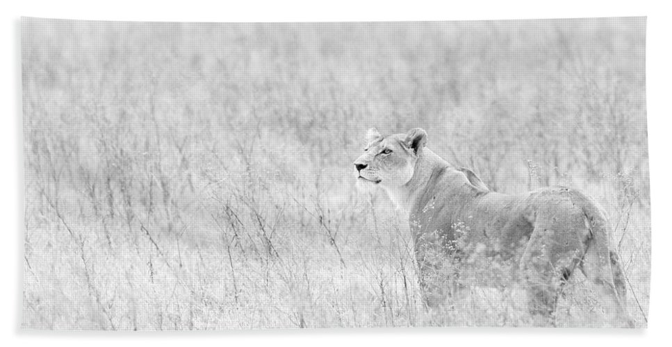 African Lion Bath Sheet featuring the photograph Lioness In Black And White by Max Waugh