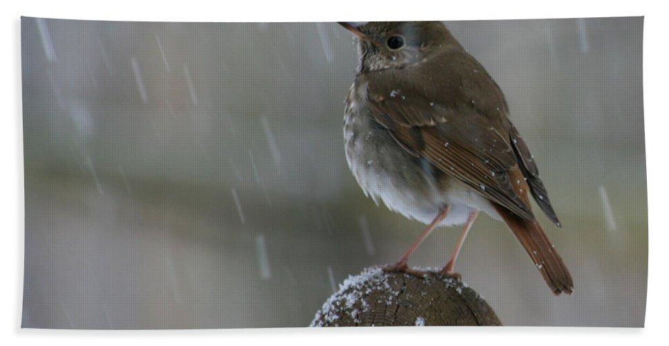 Bird Hand Towel featuring the photograph Little Bird Loving The Snow by Deborah A Andreas