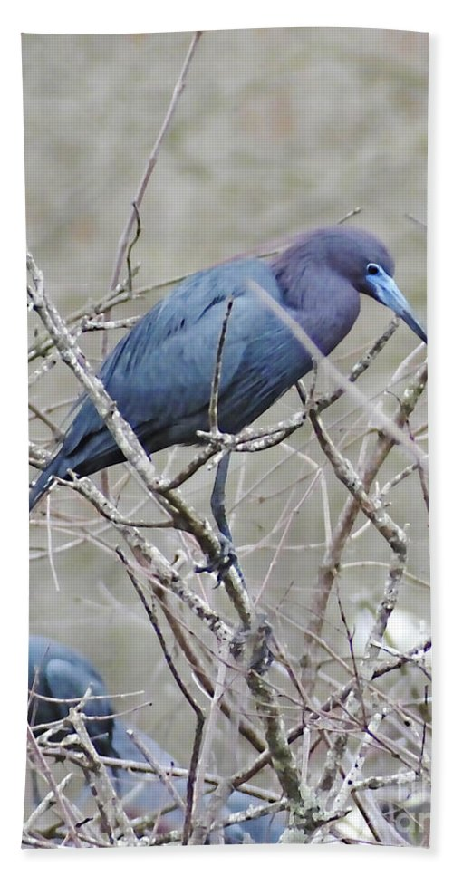 Blue Heron Hand Towel featuring the photograph Little Blue Lake Martin Louisiana by Lizi Beard-Ward