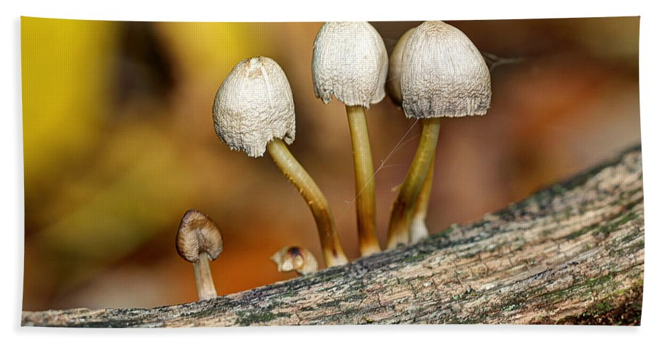 Mushroom Bath Sheet featuring the photograph Little Cloche Cap Mushroom - Panaeolus Semiovatus by Mother Nature